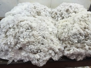 merrignee fleeces